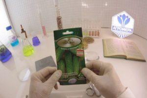 Описание огурцов Паркер f1, три способа выращивания гибридного сорта