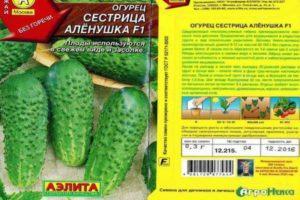 Описание огурцов Сестрица Аленушка и рекомендации по выращиванию сорта