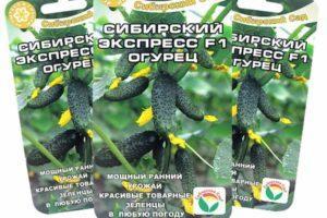 Описание огурцов сорта Сибирский экспресс F1 и правила выращивания гибрида