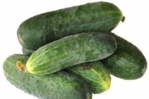 Описание огурцов сорта Альянс и выращивание гибрида