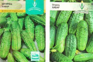 Характеристика и описание сорта огурца Хабар, выращивание в открытом грунте