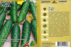 Описание огурцов Ира f1, правила выращивания и сбор урожая