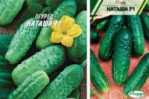 Описание гибридных огурцов сорта Наташа, выращивание и профилактика