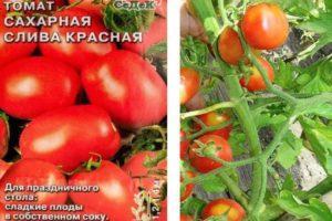 Описание отечественного томата Сахарная слива красная и его выращивание