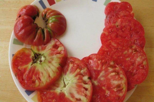 фитоплазмоз томатов