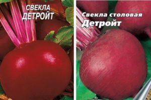 Описание столовой свеклы Детройт, разновидности и агротехника выращивания