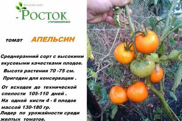 Среднеспелый томат