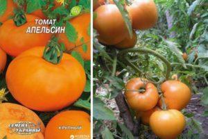 Описание сорта томата Апельсин, его характеристика и урожайность