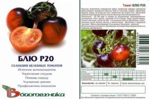 Описание экзотического томата Блю Р20, выращивание и уход