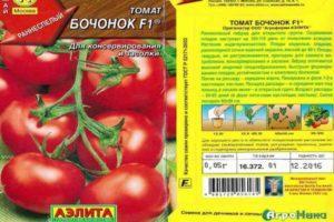 Описание крупноплодного томата Бочонок и выращивание рассадным способом