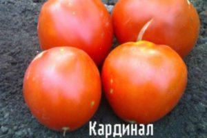 Описание сорта томата Кардинал, особенности выращивания и ухода