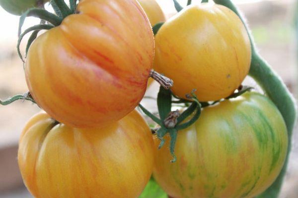 Экзотические помидоры