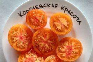 Описание экзотического томата Королевская красота и правила выращивания сорта