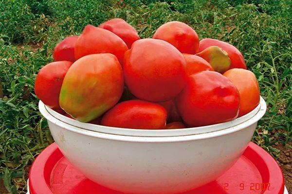 Миска с помидорами