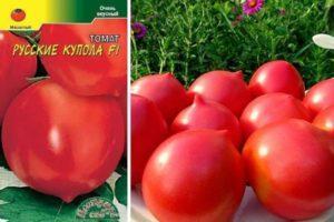 Описание сорта томата Русские купола и особенности выращивания