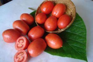 Описание томата Салют и агротехника культивирования сорта