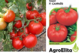 Описание сорта томата Санрайз, особенности выращивания и ухода