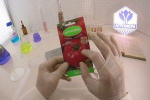 Характеристика томата Сахарок и агротехника культивирования в закрытом грунте
