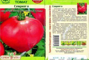 Описание сорта томата Севрюга (Пудовик), его характеристика и урожайность
