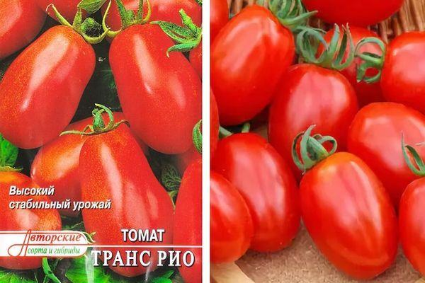 Раннеспелый томат