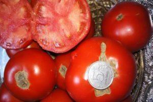 Описание сорта томата Видимо-невидимо, особенности выращивания и ухода
