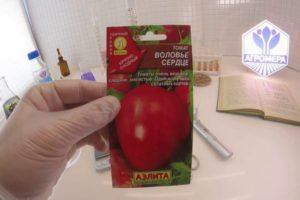 Описание сорта томата Воловье сердце, особенности выращивания и ухода