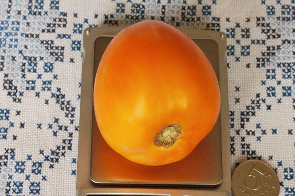 Оранжевый помидор