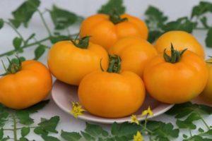 Характеристика раннеспелого томата Желтая шапочка и выращивание сорта своими руками