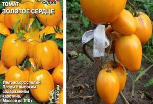 Описание сорта томата Золотое сердце, его характеристика и урожайность