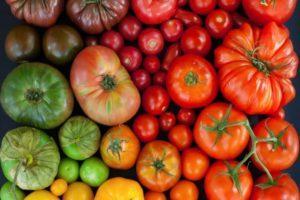 Описание лучших сортов томатов для открытого грунта в Нижегородской области