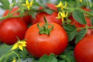 Описание сорта томата Агата, особенности выращивания и урожайность