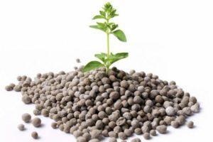 Состав и характеристики Диаммофоски, применение удобрения на огороде