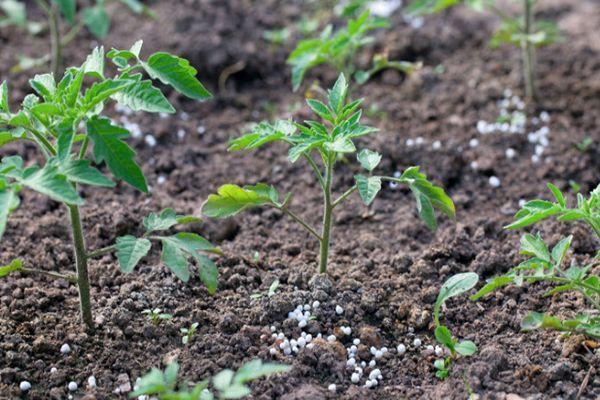 Удобрение томата