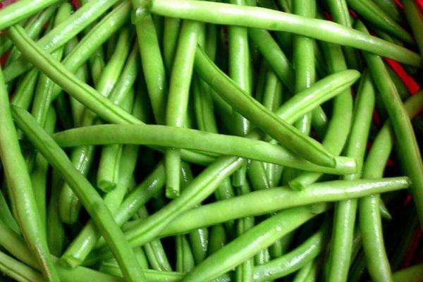 Спаржа зеленая