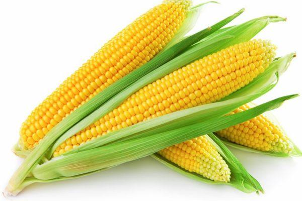 Кукуруза с початками