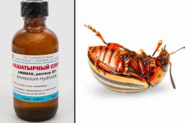 Нашатырный спирт и жук