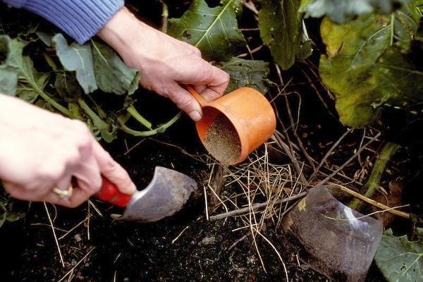 процесс удобрения огорода