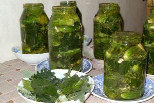 Рецепты маринования огурцов с дубовыми листьями на зиму в банках