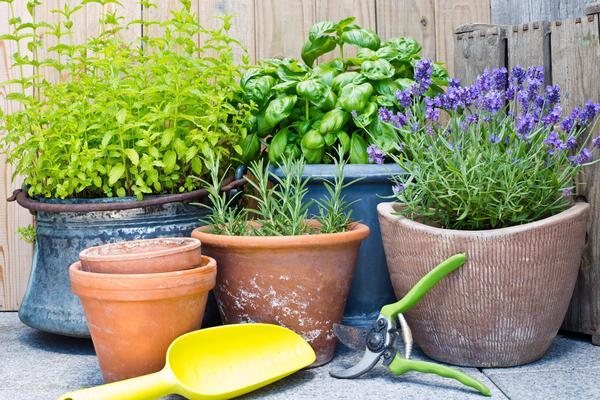 зеленые растения в горшках
