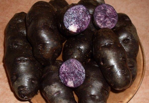 внешний вид черного картофеля