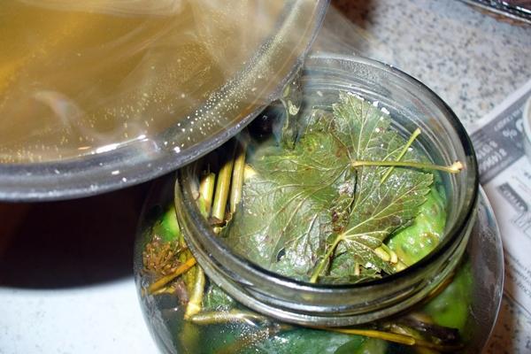 внешний вид огурцов с дубовыми листьями