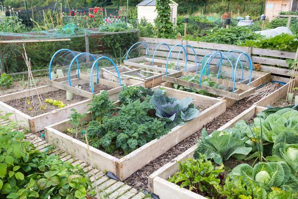 разные овощи на даче