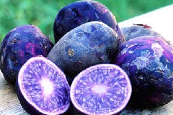сорт «Фиолетовый перуанский»