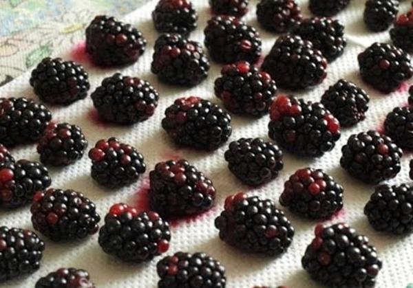 ягоды ежевики на полотенце