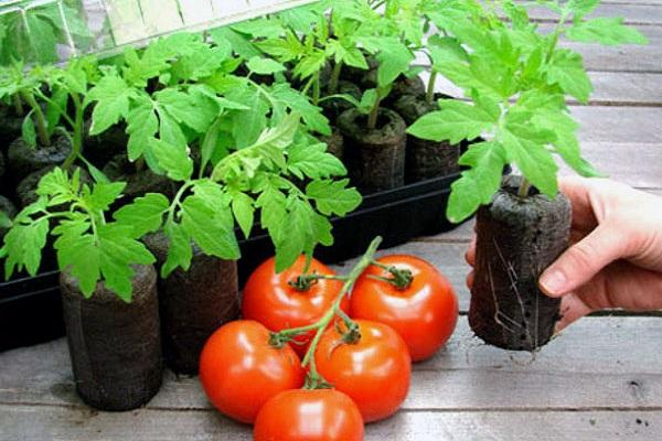 торфяные таблетки и томат
