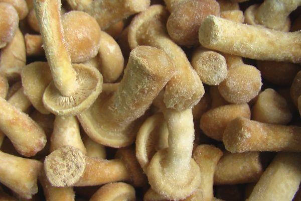 Замороженные грибочки