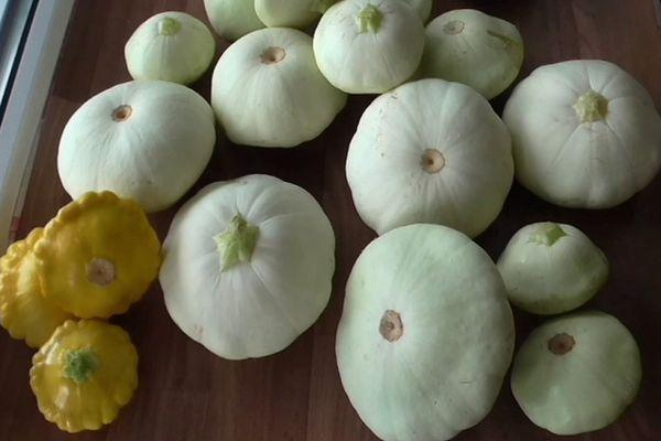 Плоды паттисона