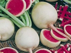 Полезные свойства и противопоказания красной редьки для здоровья, описание овоща