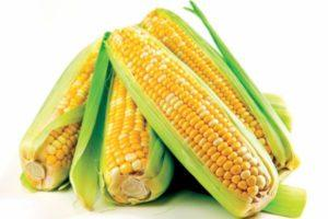 Что такое кукуруза — овощ или фрукт, к какому семейству относится злак и где применяется