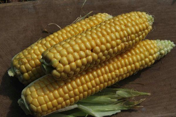 Плоды кукурузы